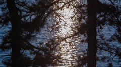 Forest Fragment In The Glare Of Moonwalk Stock Footage