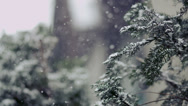 Stock Video Footage of 4K Winter Scene with Slow Motion Snow - Negative Space