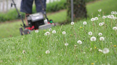 Shallow depth of field mowing towards camera Stock Footage