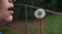 Slow motion woman blowing dandelion Stock Footage