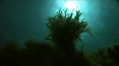Beautiful algae shake wave in blue water Stock Footage