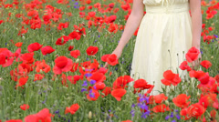 Lady hand touch poppies in flourish meadow Stock Footage