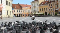 Little boy walk, pigeons nibble Stock Footage