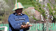 Farmer holding little chickens on his hands, feeding birds in nature - stock footage