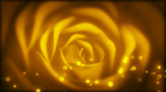Rose Bloom champaign Stock Footage