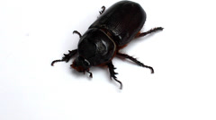 Beetle on white background Stock Footage
