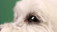 Dog Profile Eye Nose Close Up Stock Footage
