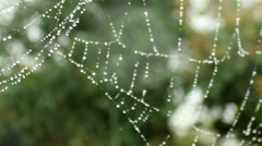 Rain on spider web Stock Footage