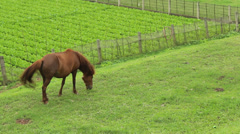 horse eat grass - stock footage