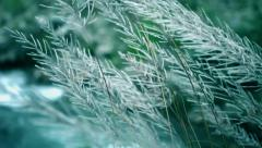 HD: Long grass swaying in the wind. - stock footage