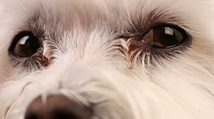 Dog Face Eyes Close Up Stock Footage