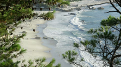 Cape Town Clifton Beach though trees Stock Footage