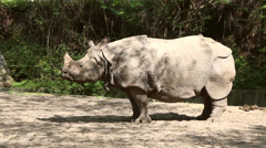 Rhino stands under the sun Stock Footage