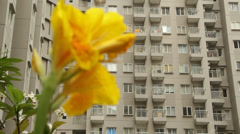 Flower in Jakarta High rise apartments Stock Footage