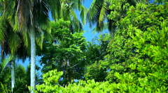 Tropical garden scenery Stock Footage