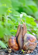 love snails - stock photo