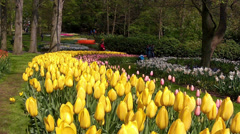 Tourists in the park Keukenhof, also known as the Garden of Europe.,. Stock Footage