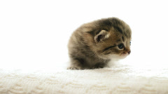 Meowing kitten, close-up Stock Footage
