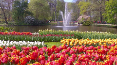 Tulips on the background of a pond with a fountain  in the park Keukenhof. - stock footage