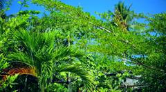 Tropical Garden Scenery Stock Footage