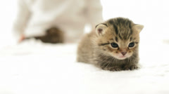 Funny kitten meowing sniffs Stock Footage