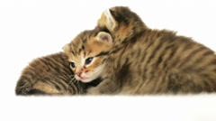 Two funny striped kittens Stock Footage