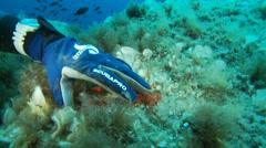 Underwater footage crustacean corsica corse mediterranean - stock footage