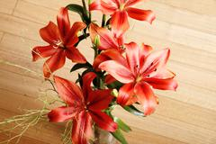Lilium flower. Stock Photos