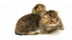 Funny kitten meowing Stock Footage