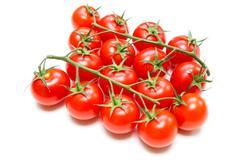Fresh tomatoes on the stalk Stock Photos