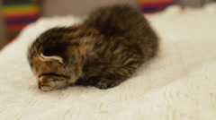 Awakening of a small kitten sleeping on a white veil, close up Stock Footage