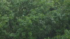 Trees on windy and rainy day in summer in nature, storm, close-up, static Stock Footage