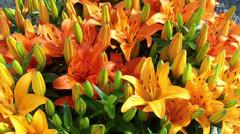 Lilys in the park Keukenhof. Stock Footage