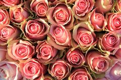 pink roses in a bridal arrangement - stock photo