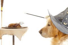 Dog Wizard - stock photo