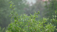 Stock Video Footage of Storm in nature in summer, close-up, static, copyspace