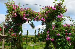 The romantic alley-way in the pergola from roses. Stock Photos