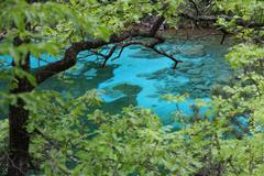 Stock Photo of crystal-clear alpine lake pristine water in the middle of the forest