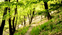 Forest - steadicam walking in forest - view from the first person Stock Footage