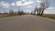 Stock Video Footage of Driving Through a Swamp, Dead Trees, Spooky