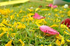 rose and flower petal on green grasses - stock photo