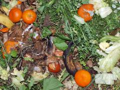 kitchen waste on a compost heap. - stock photo