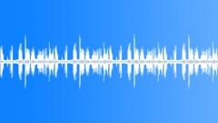 Linnut laulavat Forest Grove - ambient, tausta loop Äänitehoste