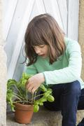 Portrait of little girl with flower pot of basil (Ocimum basilicum) Stock Photos