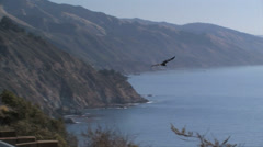 California Condor soars over Big Sur California Stock Footage