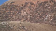 California Condor Soaring over Big Sur Mountains Stock Footage