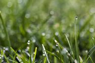 Stock Photo of Blade of grass with dewdrop