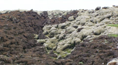 Lava rocks partly covered with moss - zoom Stock Footage