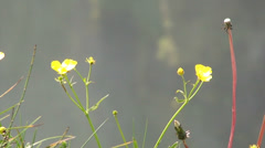 Yellow flowers in front of waterfall spray Stock Footage