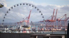 Seattle ferris wheel rack focus from seagulls Stock Footage